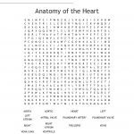 Anatomy Of The Heart Word Search   Wordmint