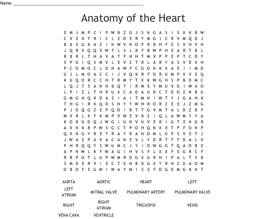 Anatomy Of The Heart Word Search - Wordmint