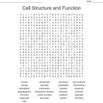 Animal & Plant Cell Word Search   Wordmint