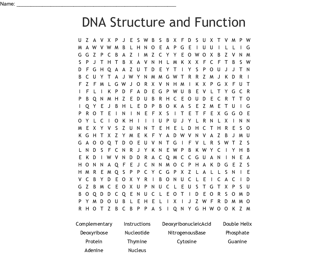 Dna Structure And Function Word Search - Wordmint