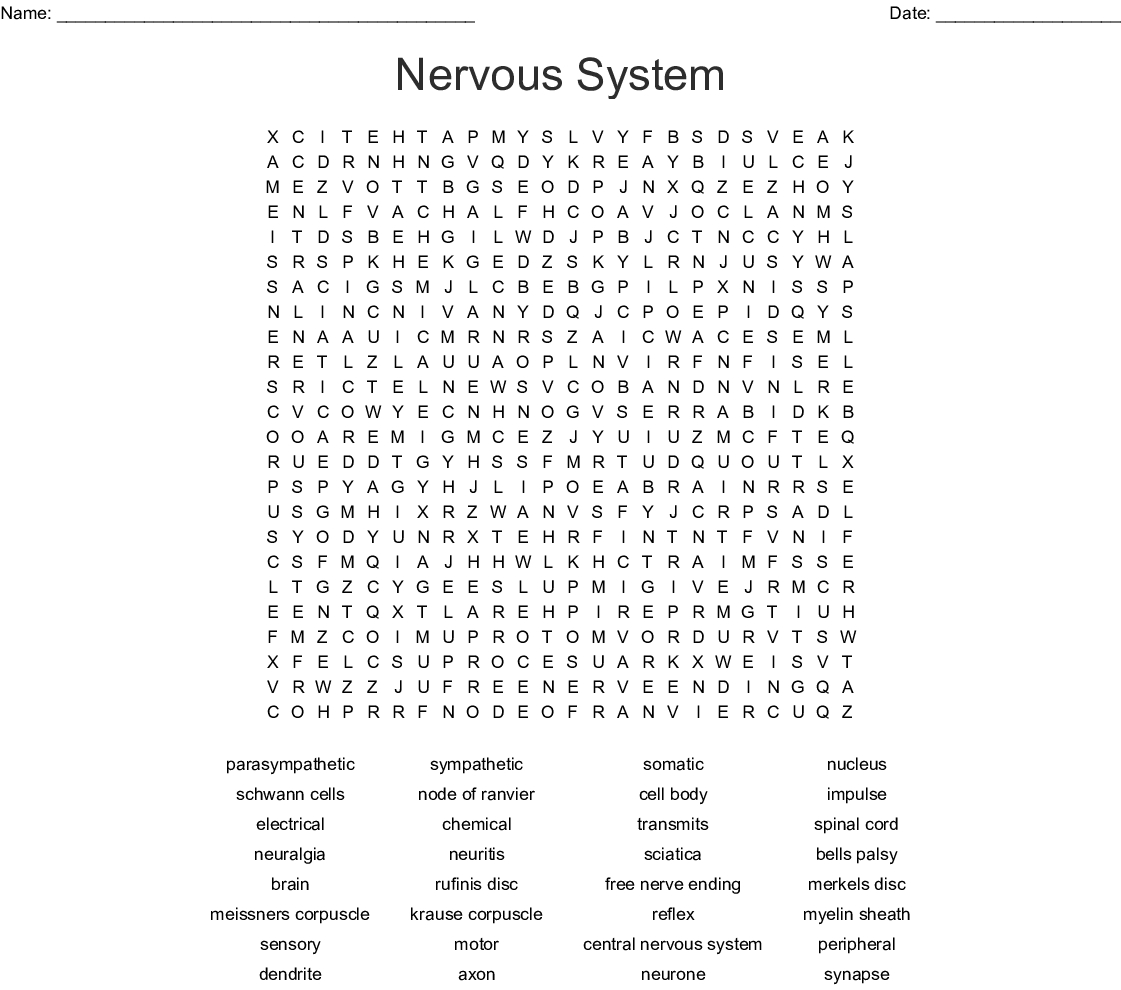 Nervous System Word Search - Wordmint