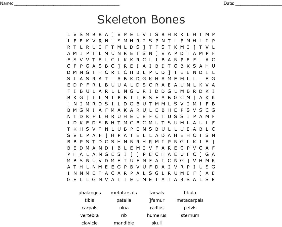 Skeleton Bones Word Search - Wordmint