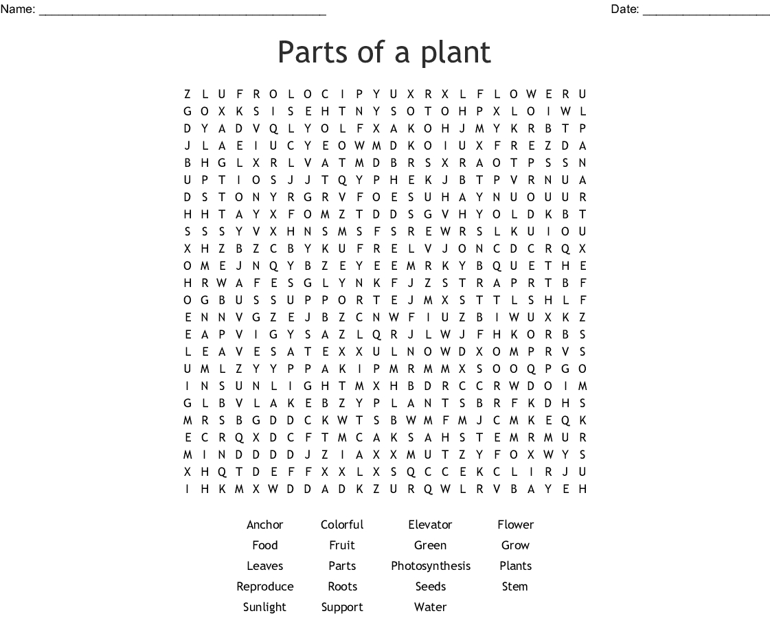 Parts Of A Plant Word Search - Wordmint