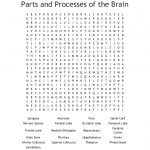 Parts Of The Brain Word Search   Wordmint