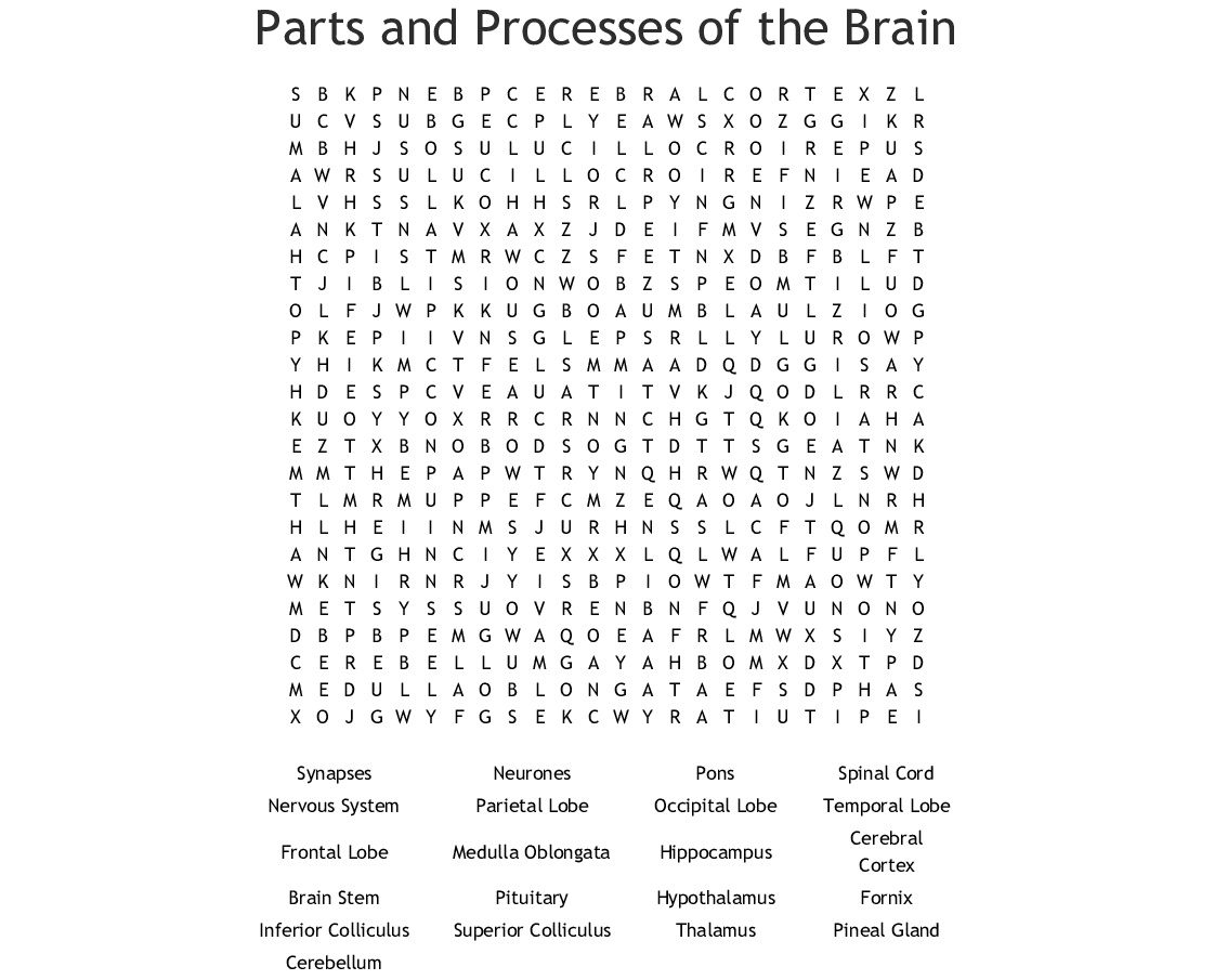 Parts Of The Brain Word Search - Wordmint