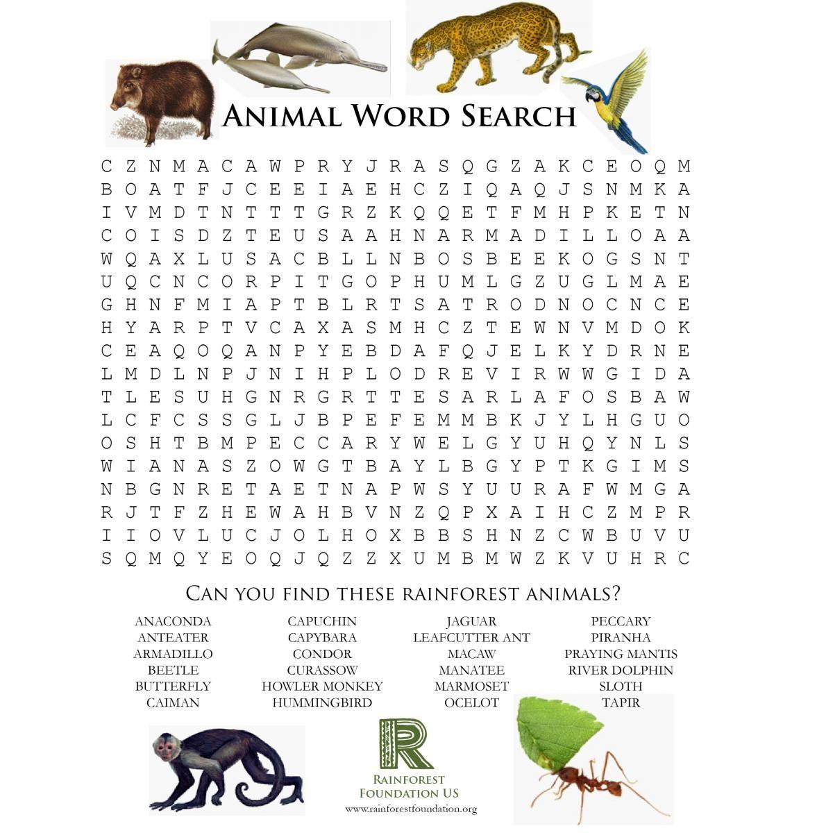 Rainforest Games And Worksheet Activities | The Rainforest