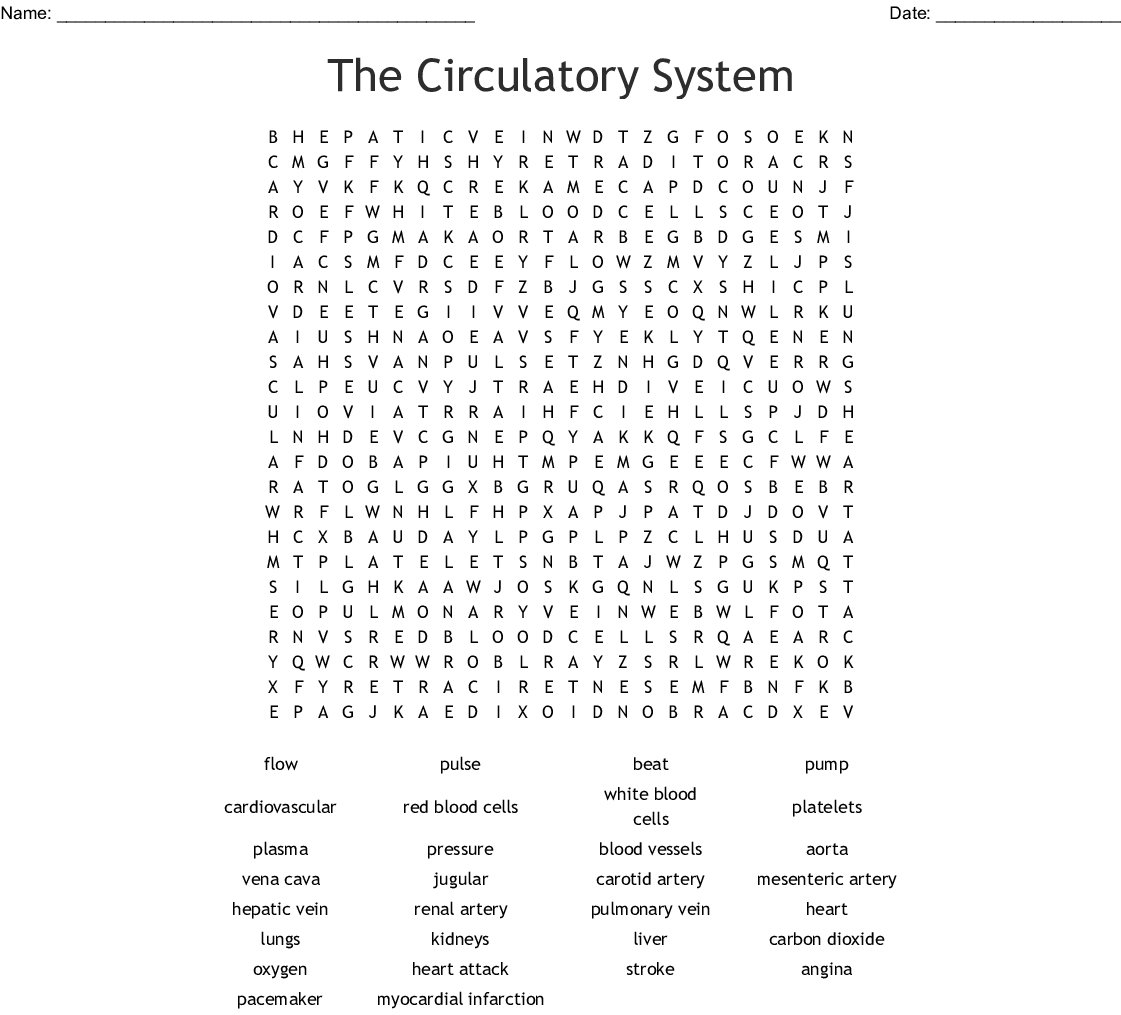 The Circulatory System Word Search - Wordmint